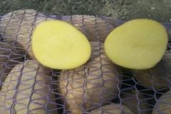 Картофель Скарб в разрезе