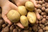Доставка картофеля в Минске