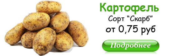 Картофель с доставкой в Минске
